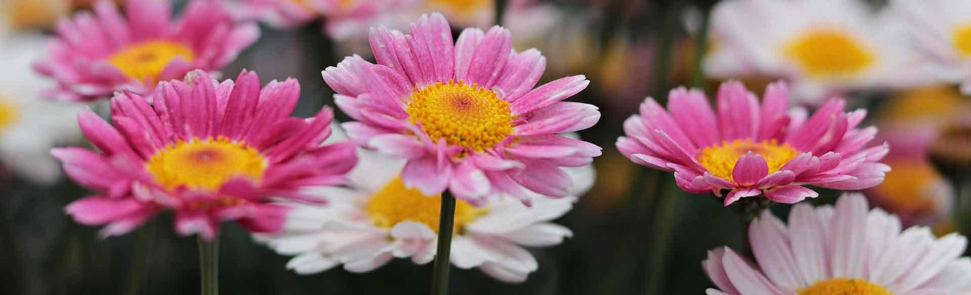 flowers-3357958_1920@1920w
