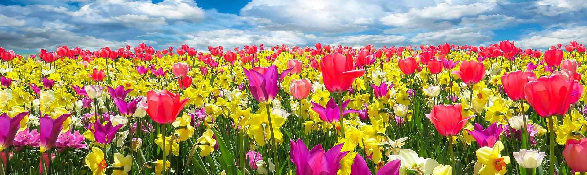 spring-awakening-1197602_1920@1920w