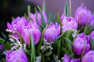 tulips-4925923_1280