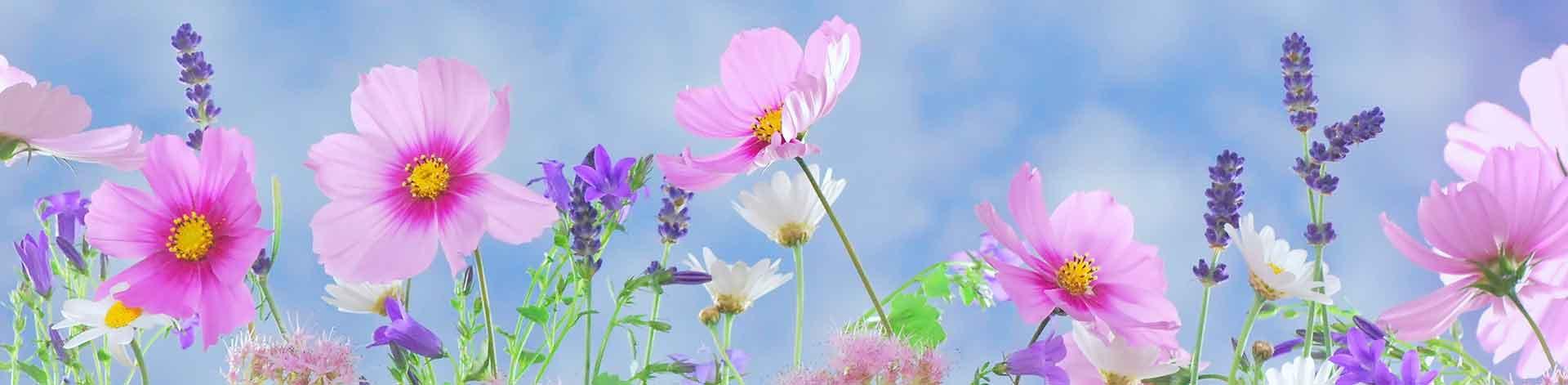 wild-flowers-571940@1920w